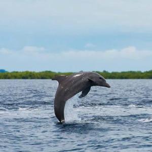 Dolphin-bay-Bocas-del-Toro